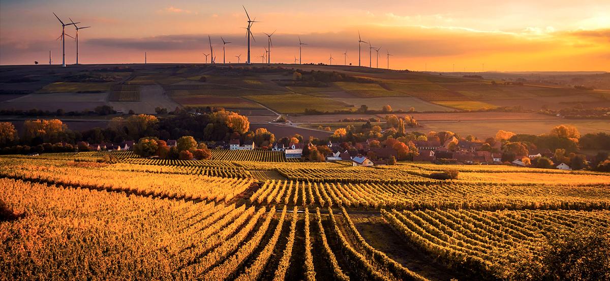 campo de viñas